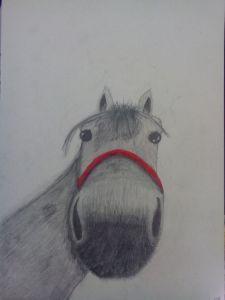 Anna Strojná - Portrét koně